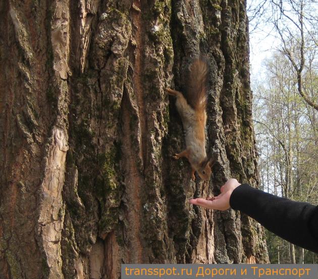 Деревья - место жизни для животных