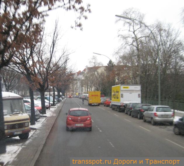Уличные деревья зимой