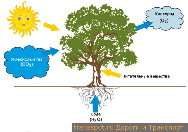 Преобразование углекислого газа в кислород